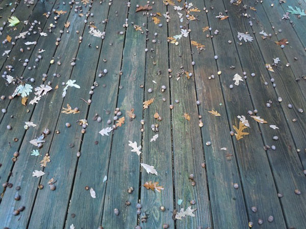 House Cleaning: Handling Pollen through Pressure Washing
